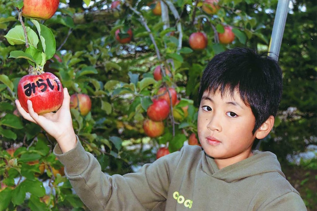 ふるさとの児童に贈る名前入りのリンゴを収穫する遠藤快莉君