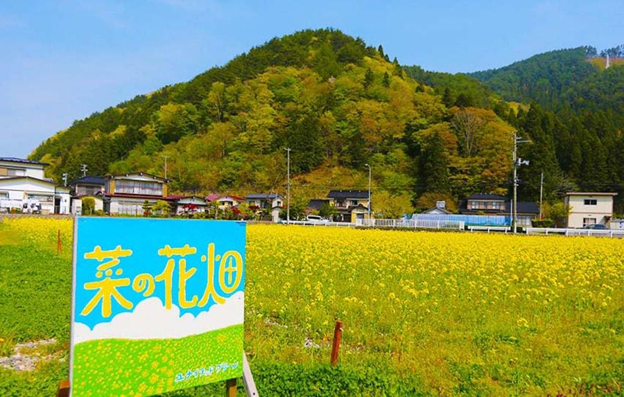 県道沿いに広がる菜の花畑