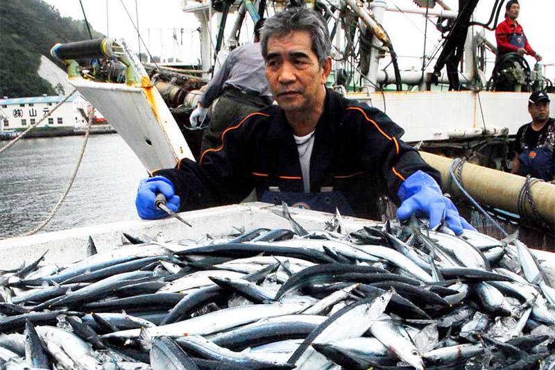 釜石港に初水揚げされたサンマ=4日正午過ぎ