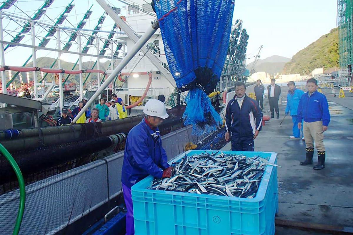 釜石港にサンマを初水揚げする浜幸水産の新造船・第65欣栄丸