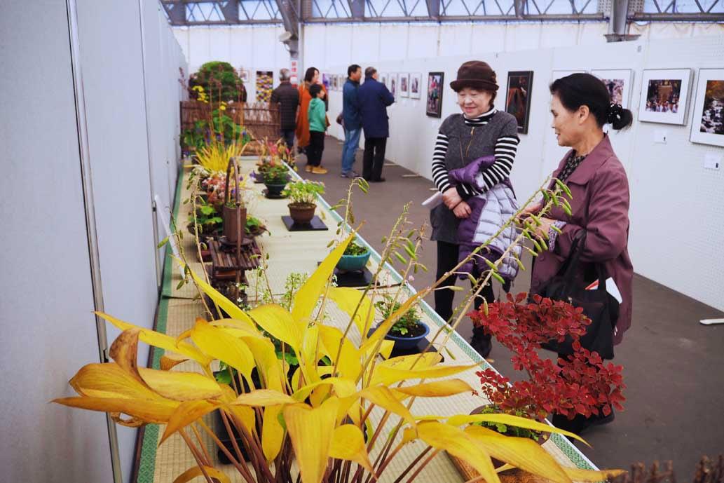 釜石草友会の展示では山や野原で育った四季折々の草花の素朴さに来場者もほっこり