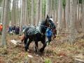 県内でも志す人が増えてきているという「馬搬」。しっかり仕事をこなす馬に参加者も感心しながら見入った