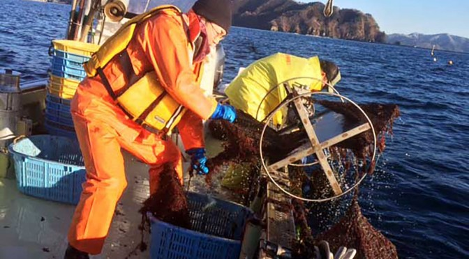 慣れない洋上作業にも、カゴ漁の成果に海の豊かさを体感した