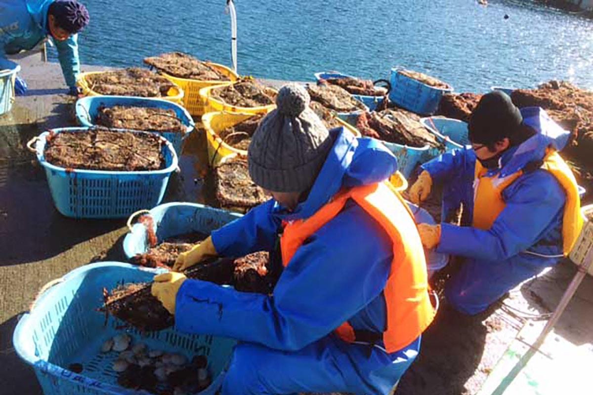 >ホタテの分散作業で、養殖漁業を体験、その意味を学んだ