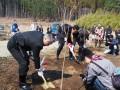 鵜住居町根浜地区で「淡墨桜」の苗木を植える3市長