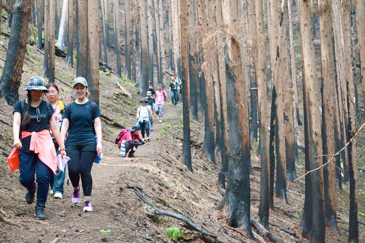 山林火災跡のコースを進むトレッキング参加者