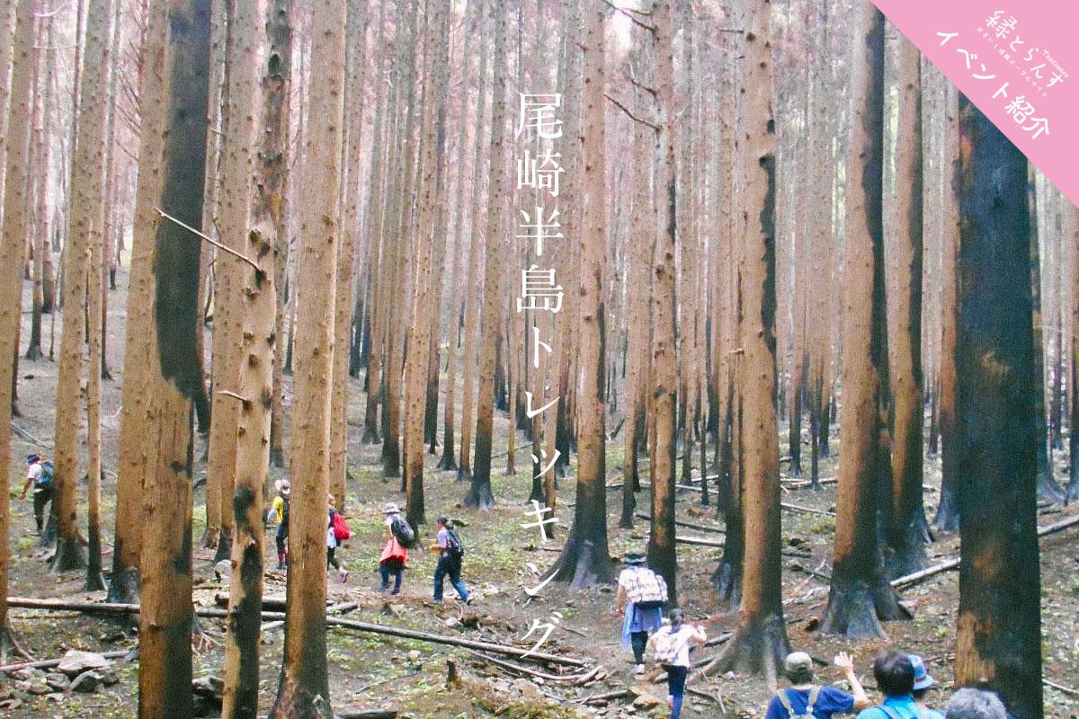 【イベント紹介】あなたの参加が再生につながる尾崎半島トレッキング