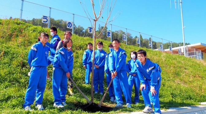 きれいな花が咲くよう願いを込めながらオオシマザクラを植えた釜石東中の生徒ら