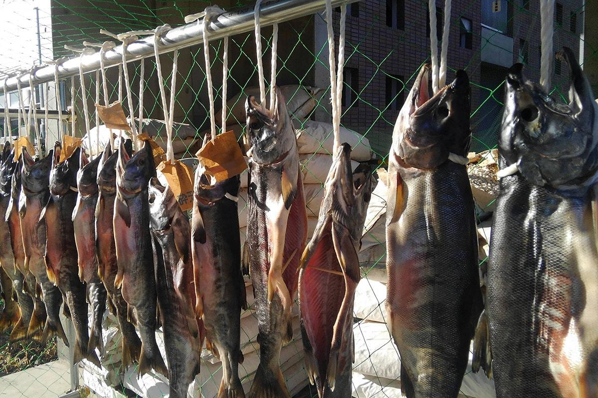 完成間近の新巻鮭