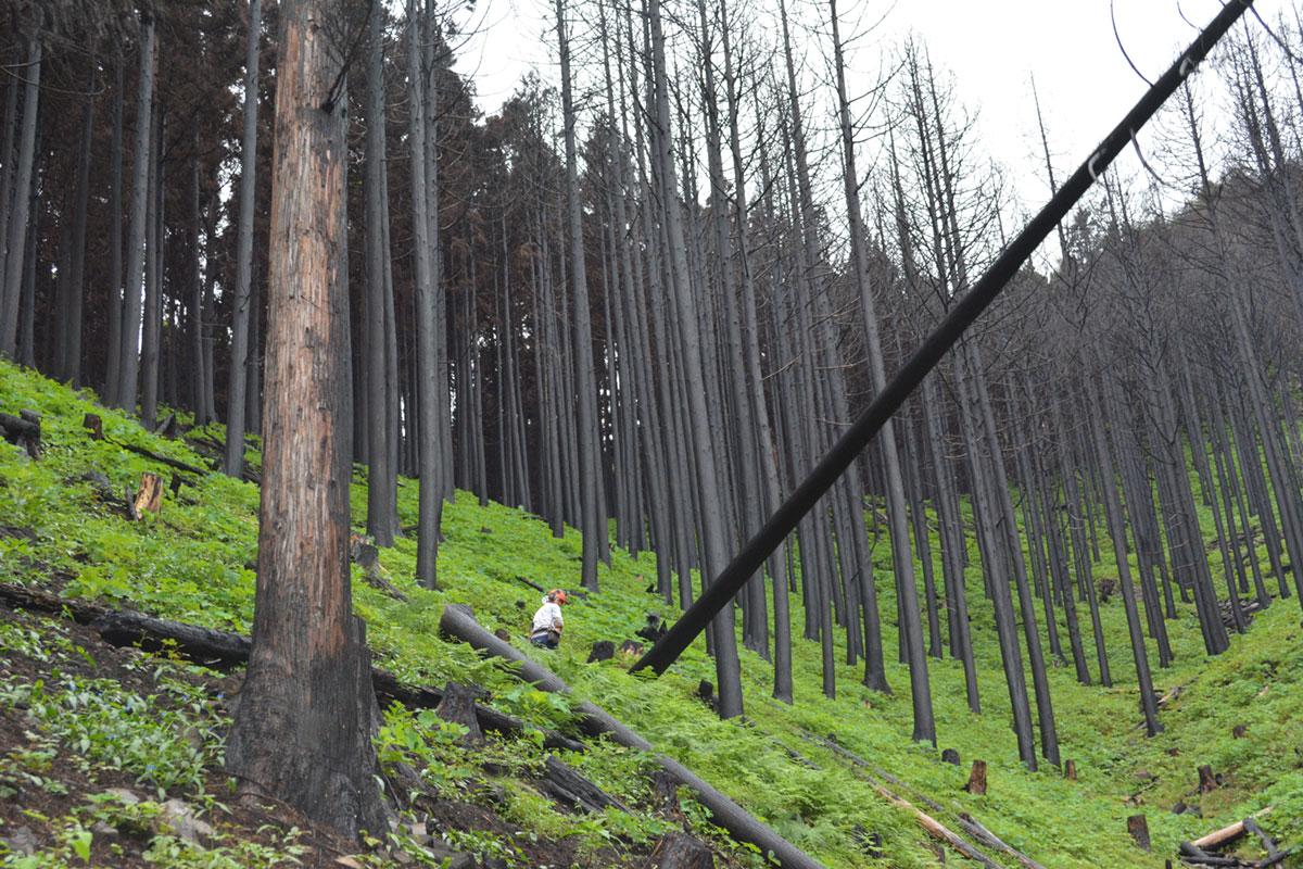 被害木伐採の様子