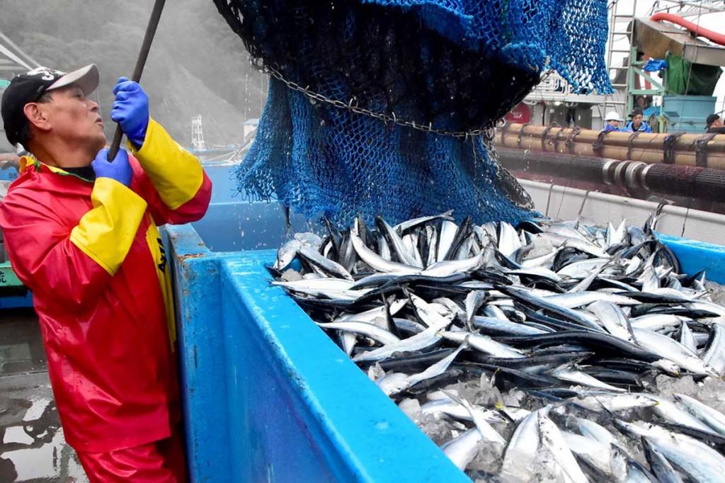 サンマの初水揚げに沸く釜石魚市場=1日午前5時20分