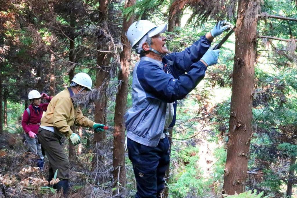 スギの枝打ち作業に汗を流す参加者。将来、この地に広葉樹の森が広がることを夢見て…