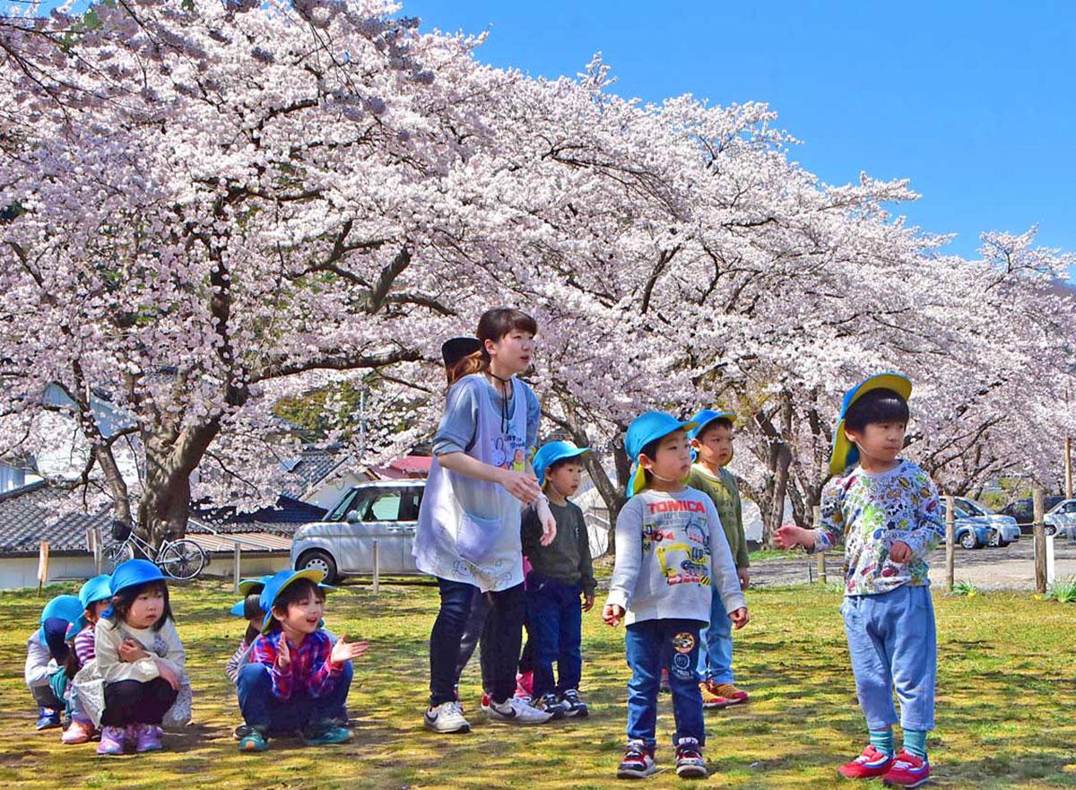 満開の桜の下で遊ぶピッコロ子ども倶楽部桜木園の園児ら