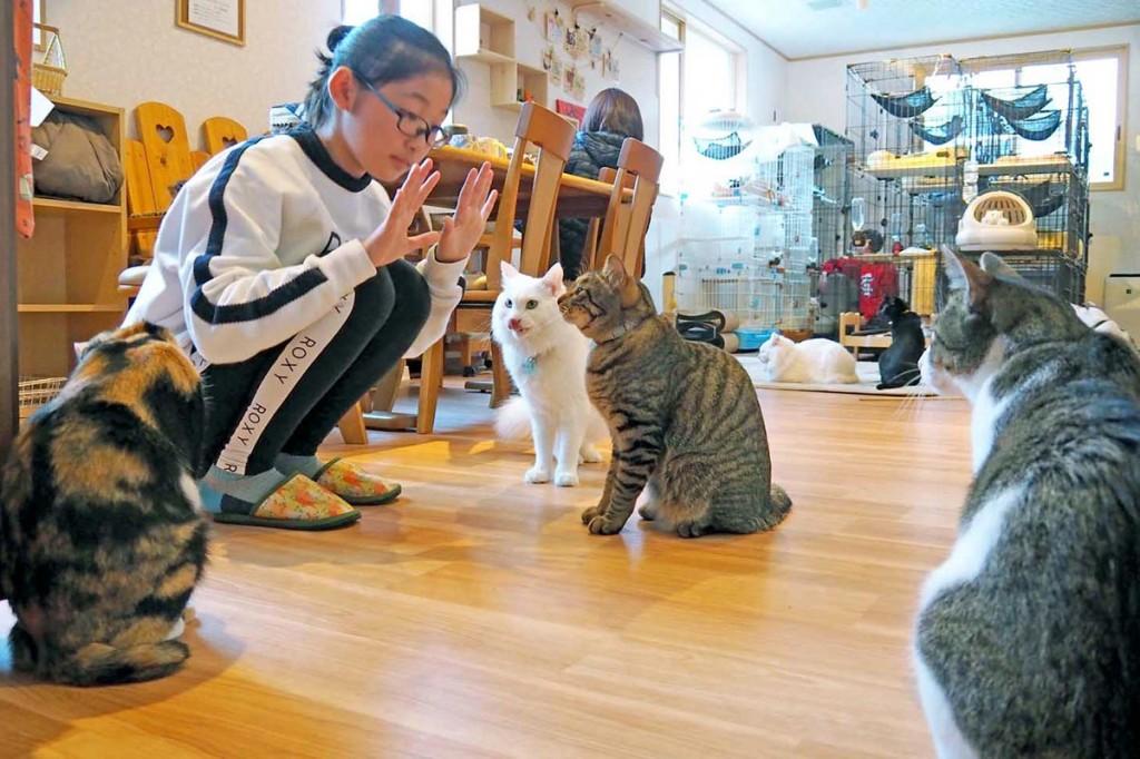 思い思いに猫との触れ合いを楽しむ姿が見られる店内
