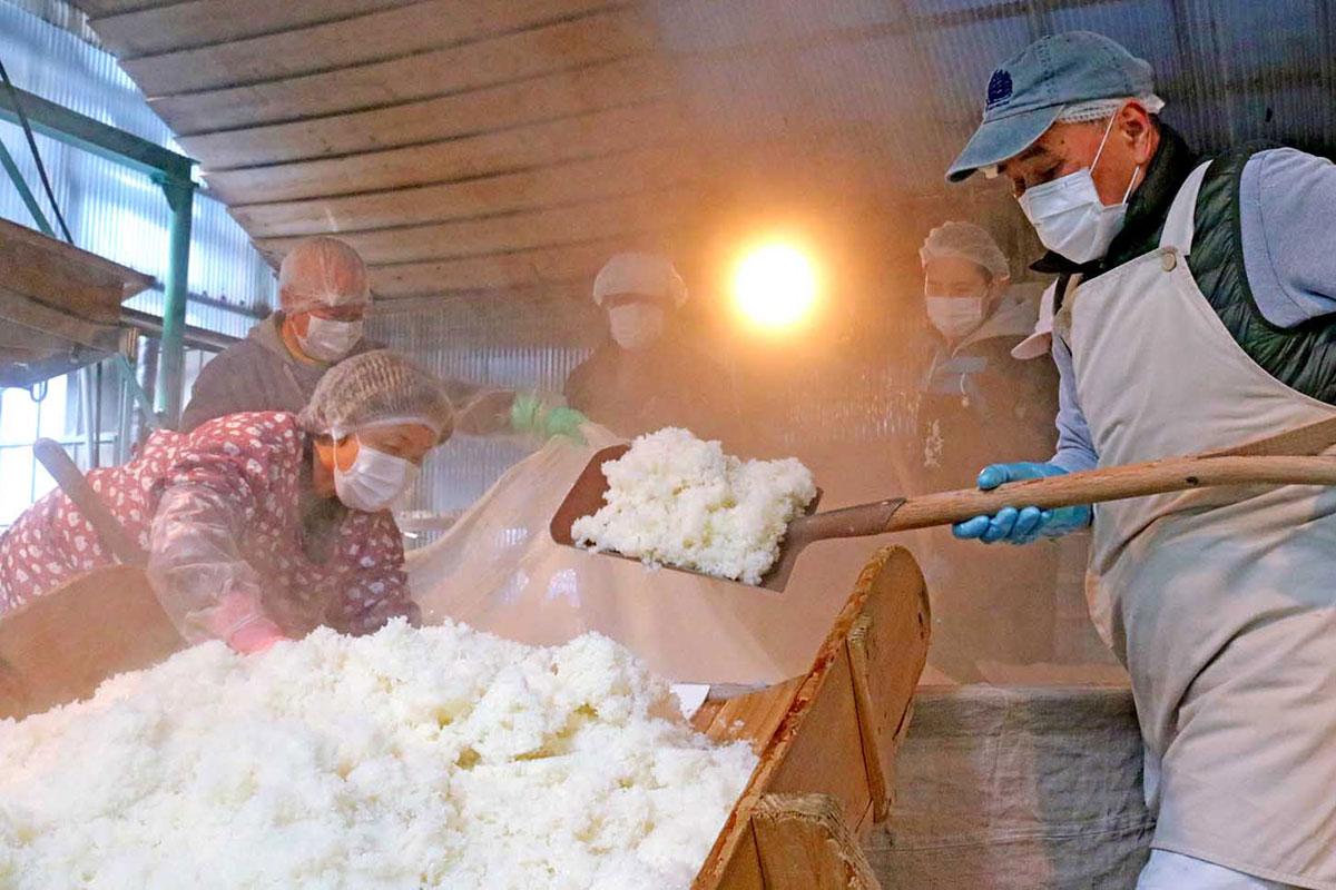 甑(こしき)から冷却機へ蒸米を移す作業を体験する参加者