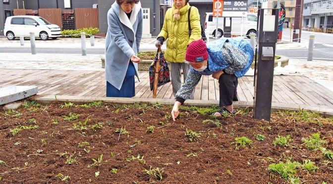 シカに食い荒らされた青葉通りの花壇。住民らはシカの侵入を防ぐ対策に苦慮している