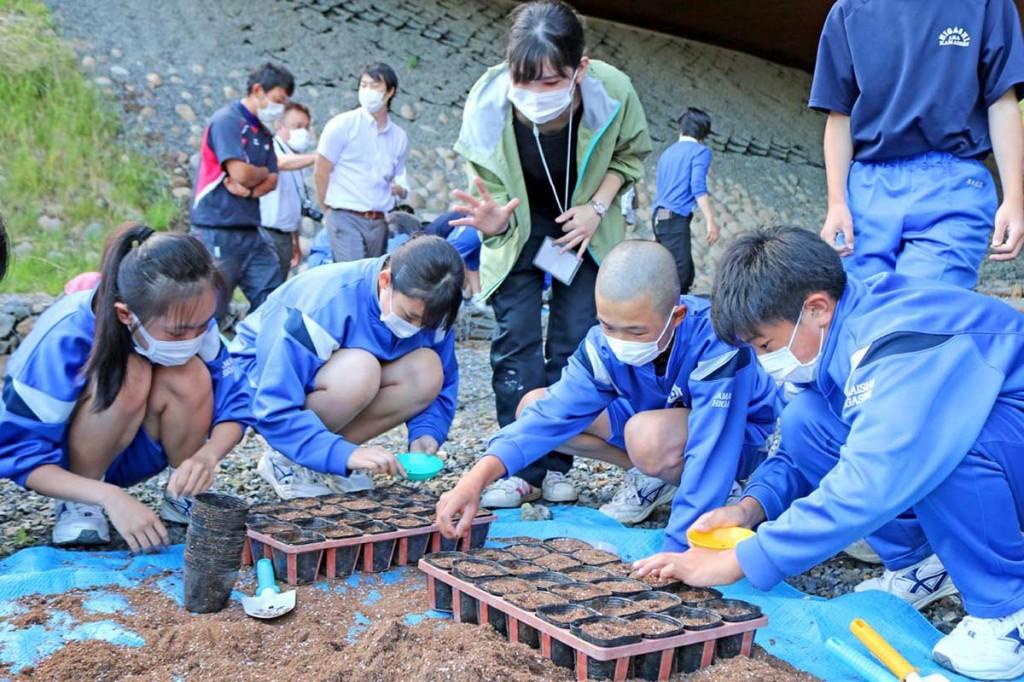 根浜に植える海浜植物の種をまく釜石東中の2年生