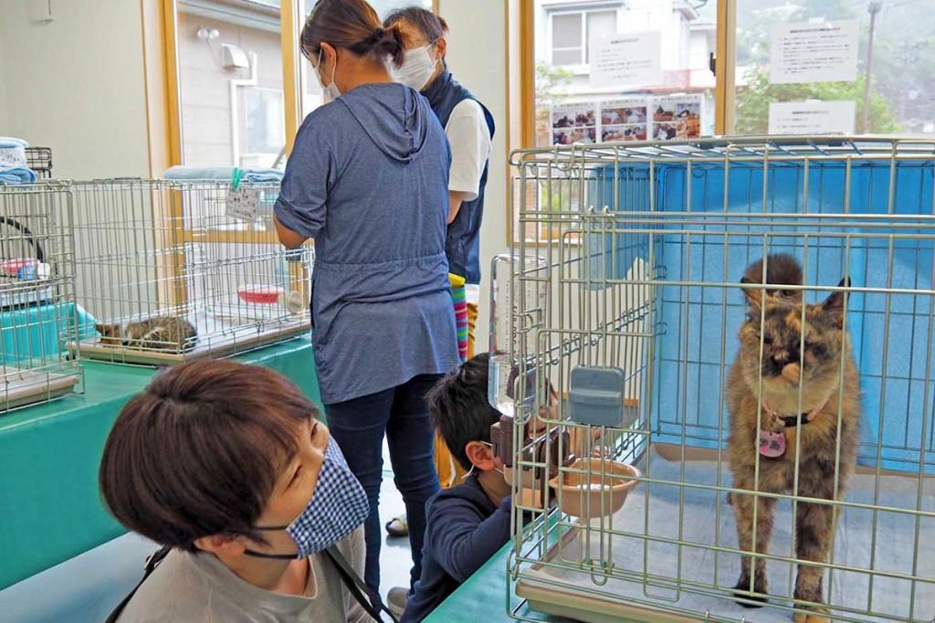 保護猫と新たな飼い主の出会いの場となる譲渡会
