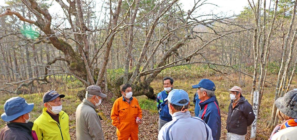新しい幹が順調に育つ和山のシナノキ