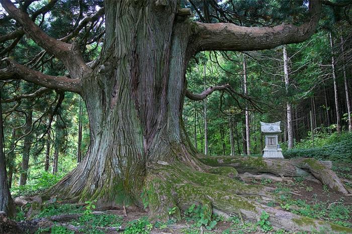 鵜住居川流域巨木ツーリズム