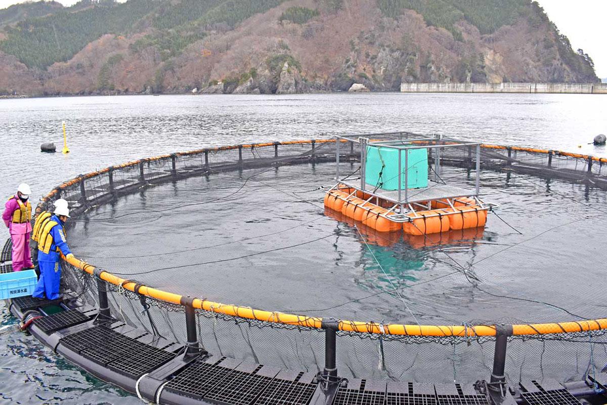 海面養殖試験が行われるいけすでは給餌作業が公開された