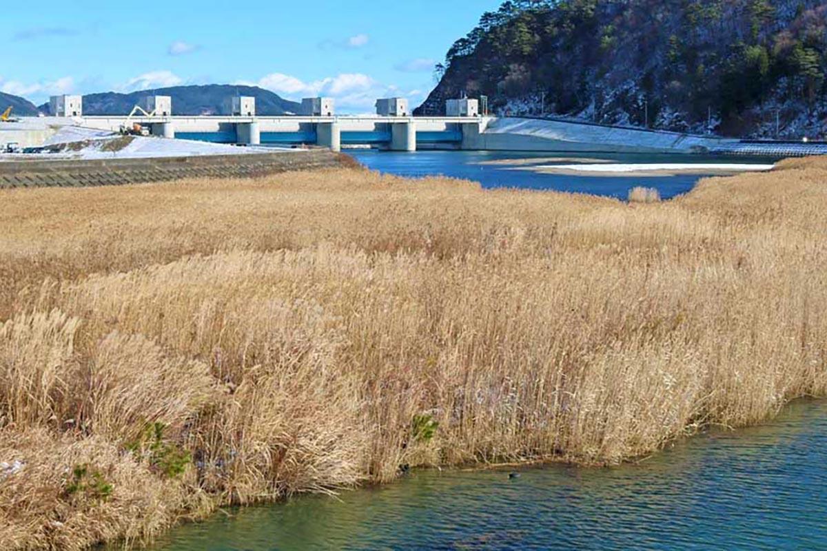 鳥の隠れ家となる草地が再生してきた現在の鵜住居川