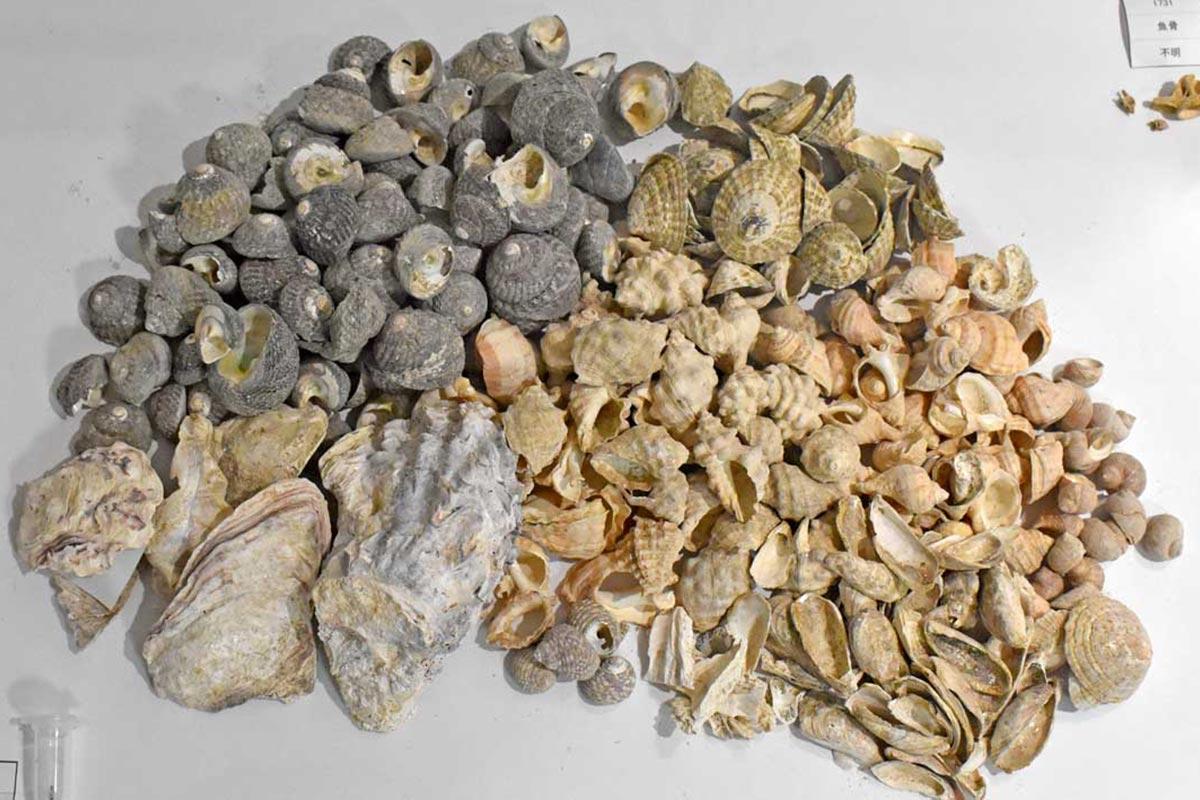 現在も食用とされる貝類も貝塚から出土