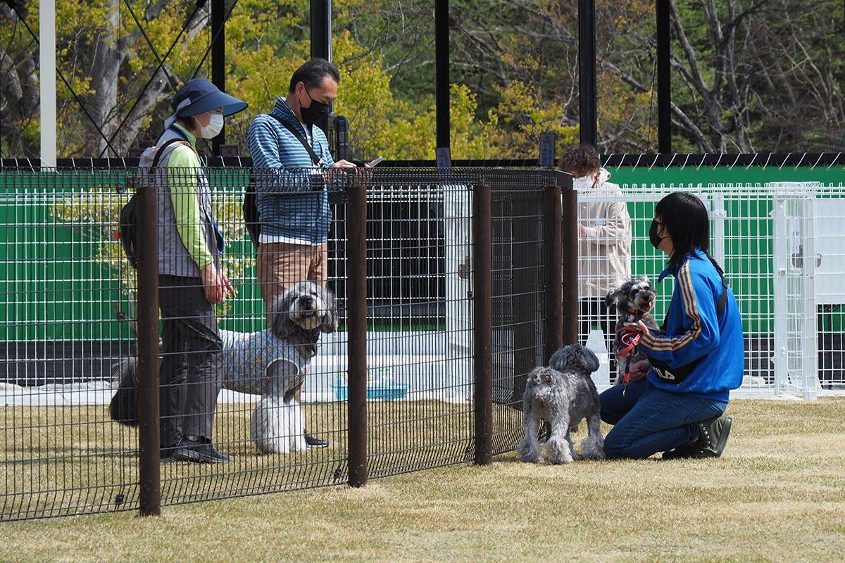 大型犬、小型犬エリアの仕切りを挟んで交流を楽しむ飼い主ら