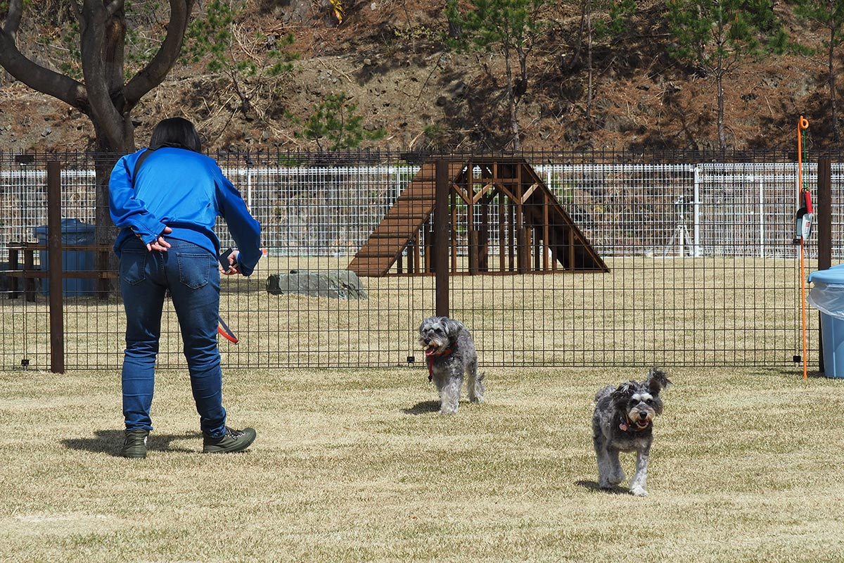 犬たちは元気に駆け回り、飼い主たちはスマホでパチリ