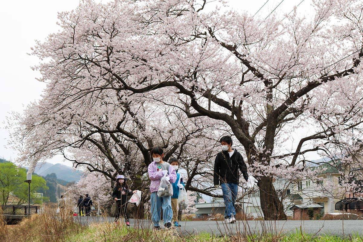 満開の桜の下でごみ拾いに励む子どもら