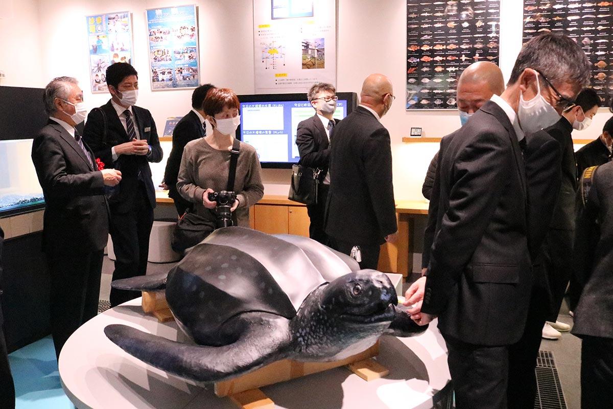 オサガメのはく製が出迎える「おおつち海の勉強室」の展示室