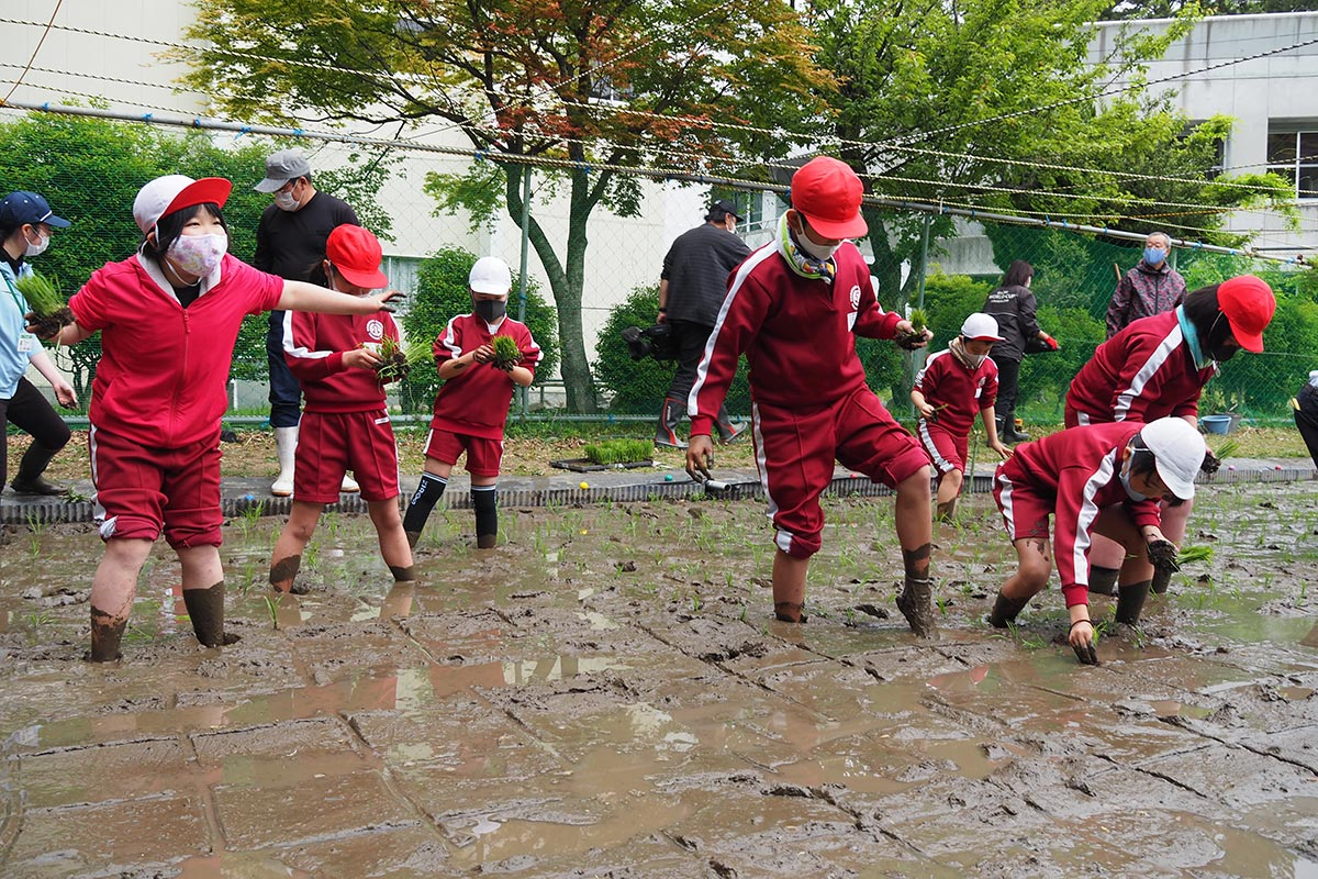 やわらかい泥に足を取られながらも楽しそうに田植えに取り組む児童