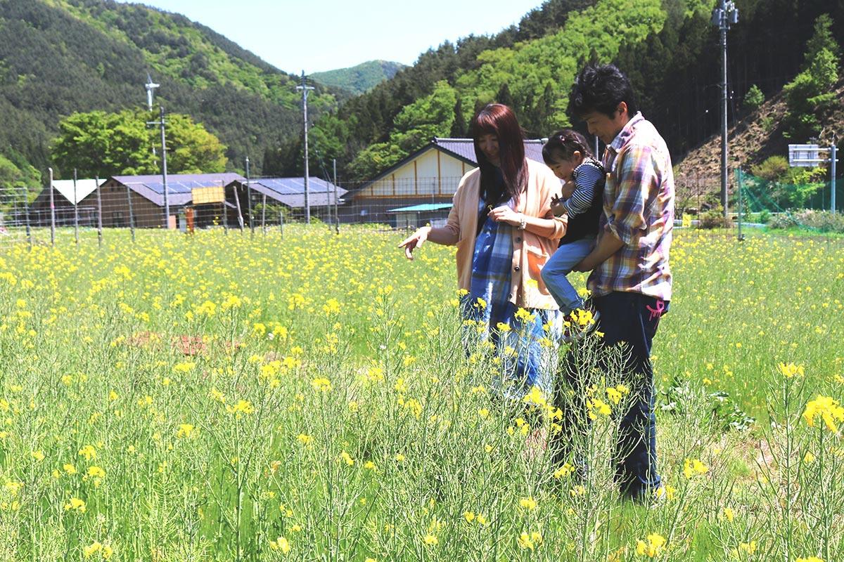 目にも鮮やかな菜の花が楽しめる農園=15日