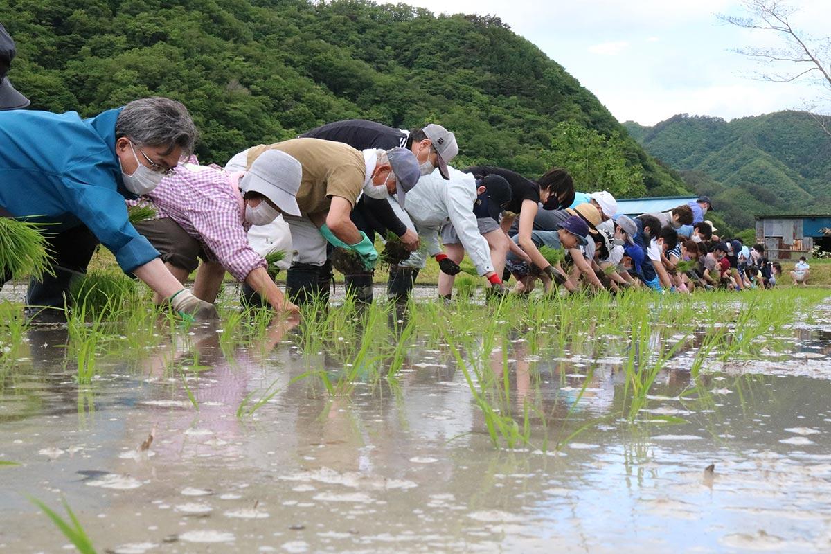 作業が進むにつれ、青苗の列がきれいに並ぶ田んぼ