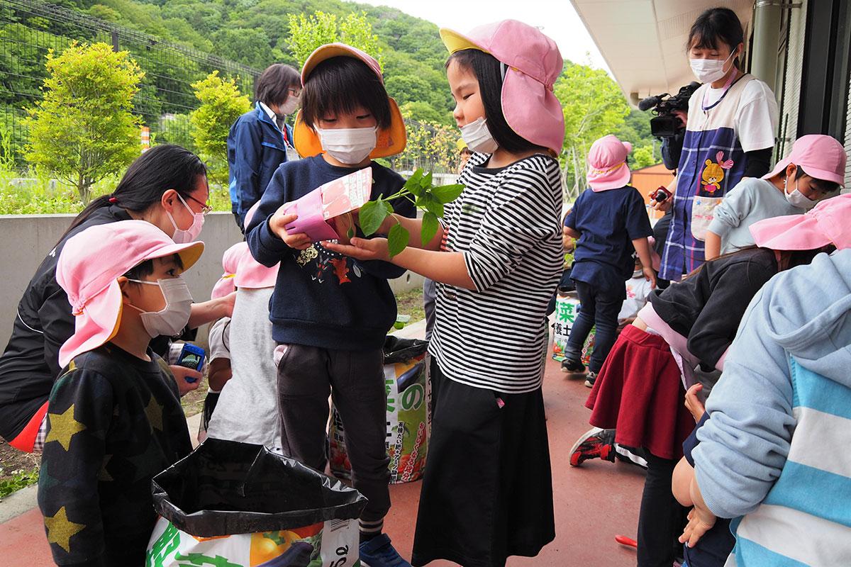 省スペースで野菜づくりが楽しめる袋栽培を始めた上中島こども園の園児たち
