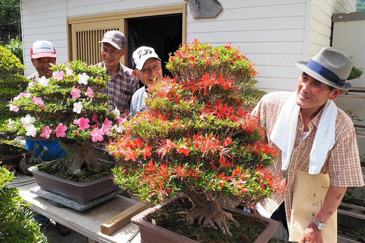 丹精込めて育てたサツキが見ごろを迎え、花姿を満足げに眺める会員ら=3日