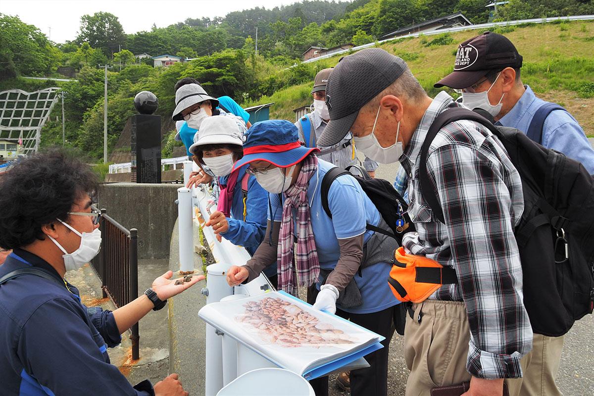 大石漁港付近で採取した貝と出土品を照らし合わせてみる参加者=8日