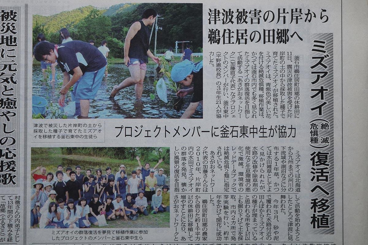 ミズアオイ復活への取り組みを紹介する新聞記事=復興釜石新聞(2012年9月)
