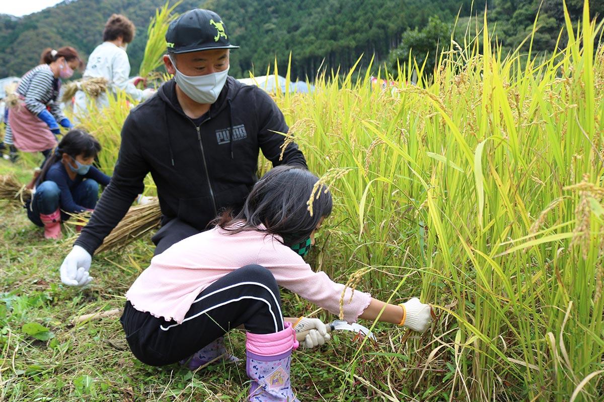 浜千鳥酒造り体験塾で稲刈りに挑戦する親子