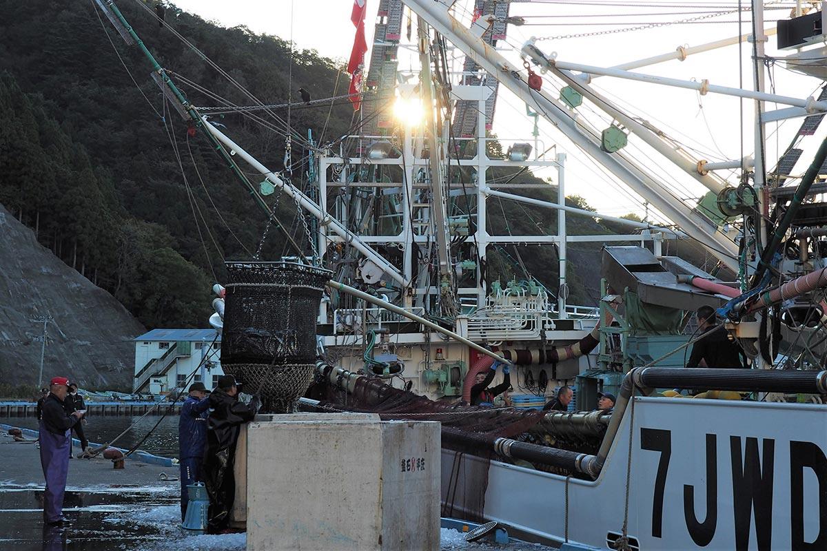 サンマの初水揚げに活気づく新浜町魚市場=21日午前6時37分